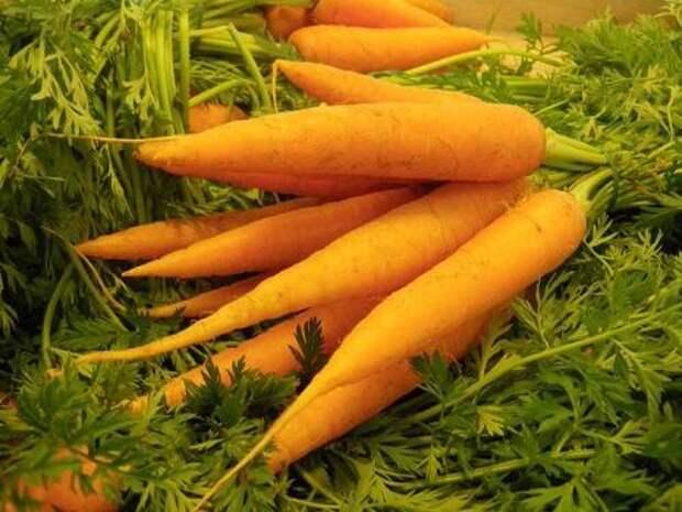 Морковь. 25 интересных фактов. Мой сад, огород.