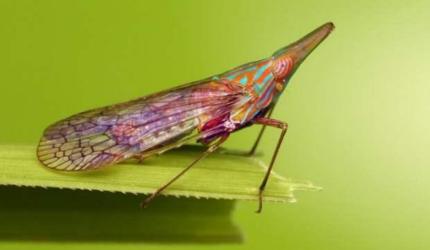 15 животных, которые созданы природой, чтобы удивлять Животные, Природа, Длиннопост