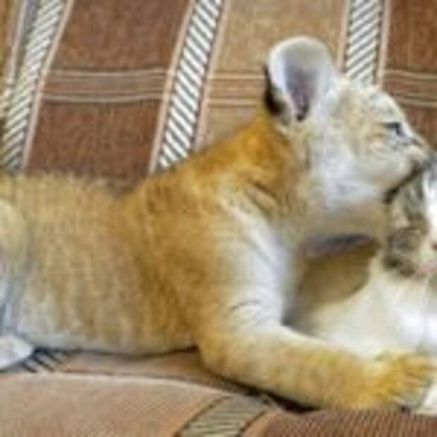 Чудесные фотографии кошек