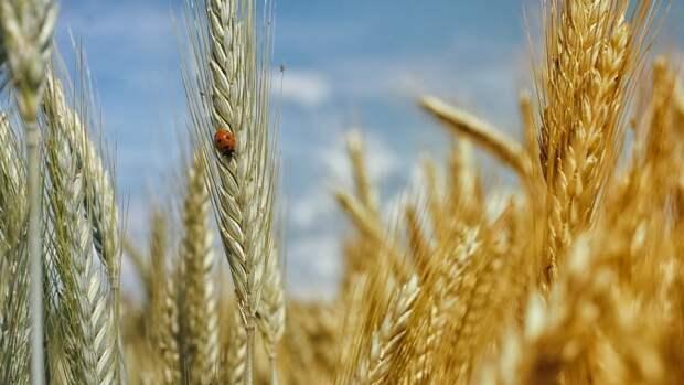 Украинские силовики оставили ДНР без пшеницы
