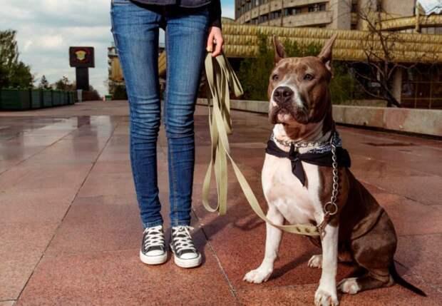 ВВеликобритании собака задушила свою хозяйку