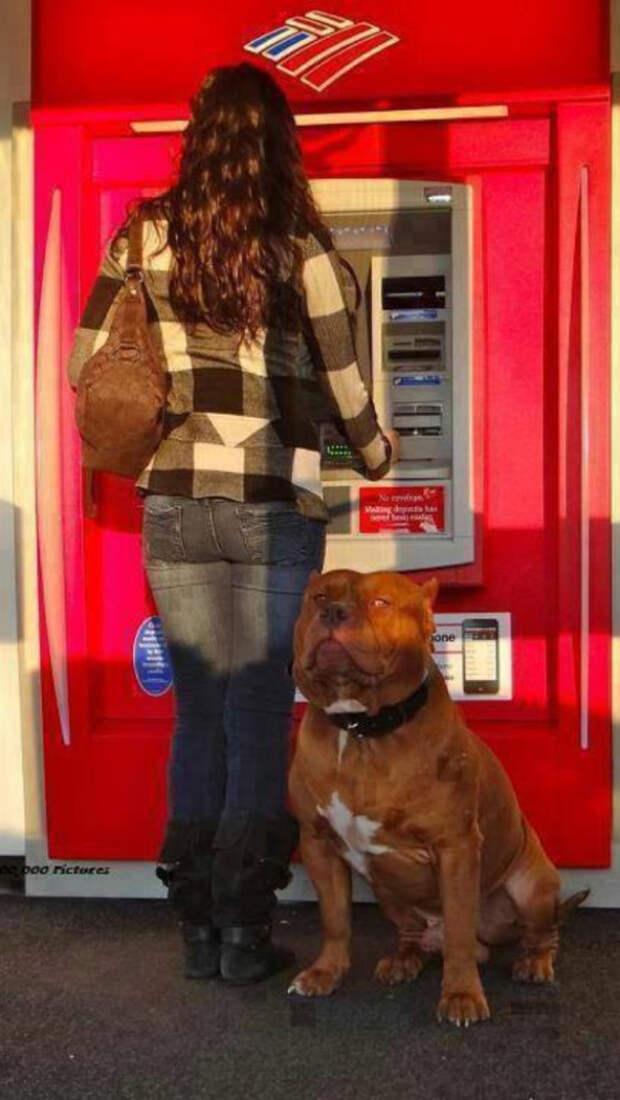 С такой охраной даже самая хрупкая девушка может отправиться в банкомат по ночной безлюдной улице Охранники, банкомат, безопасность, деньги, друзья человека, животные, охрана, собаки