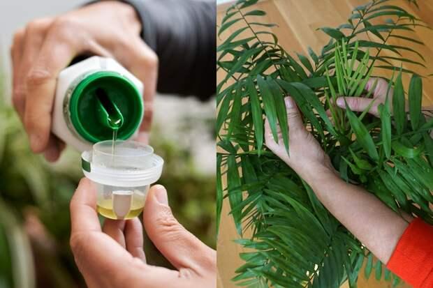 Способ подкормки растений, после которого они растут с новой силой