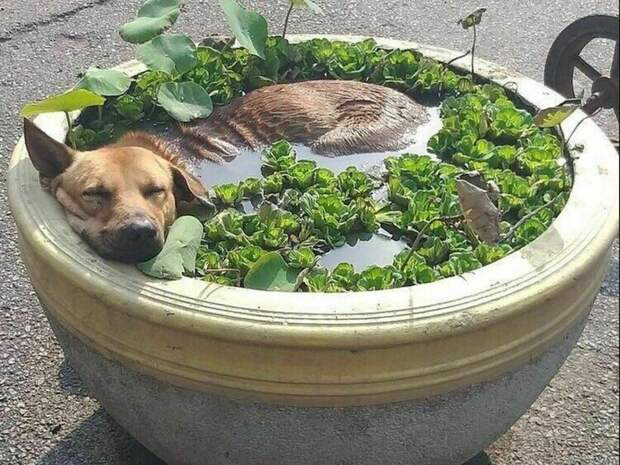 В тазиках и прудиках: 11 забавных животных, которые спасаются от жары как могут