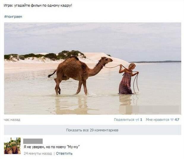 Бедный верблюд комменту жгут, комменты, пользователи комментируют, прикол, смешные комментарии, соцсети, фото