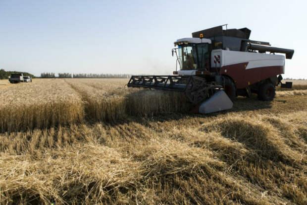 Западные эксперты признали господство России на мировом рынке пшеницы