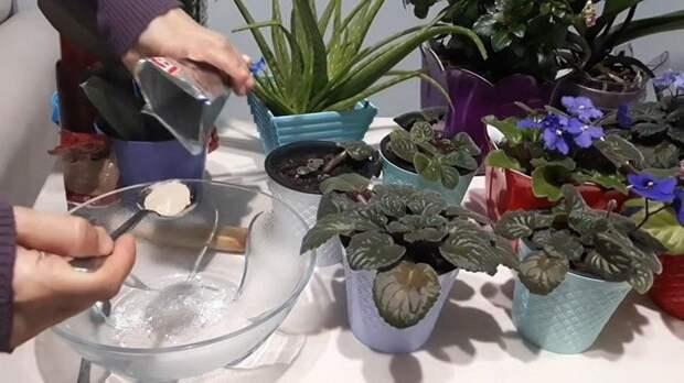 Два ингредиента — и ваши цветы удивят вас