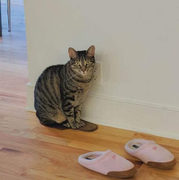 кот ждет хозяина