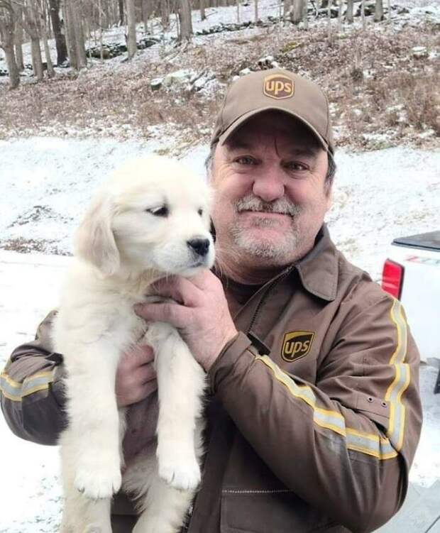 Мохнатые непоседы встречают курьеров: проект «UPS Dogs» набирает обороты