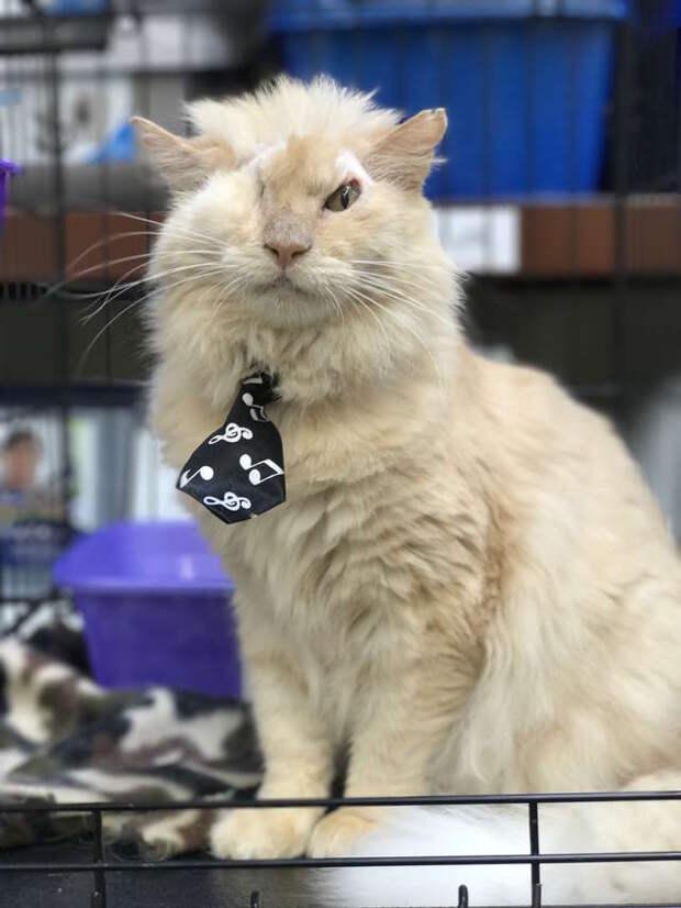 лечение больного кота