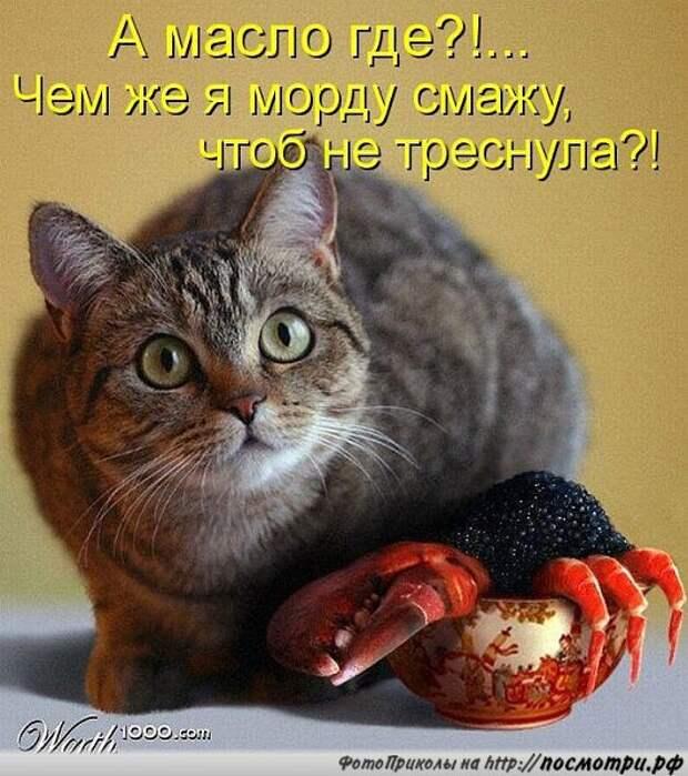 Байки про котов 11