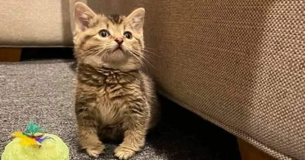 Этот косолапый котенок радуется жизни и прыгает как кролик. Вот 7 его милейших фото
