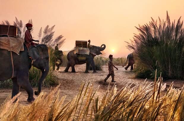 Отношения человека и слона в фотографиях