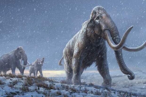 Из зубов трех российских мамонтов удалось извлечь ДНК возрастом 1,2 млн лет