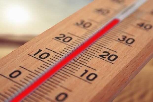До 38 градусов жары прогнозируется в Тамбовской области