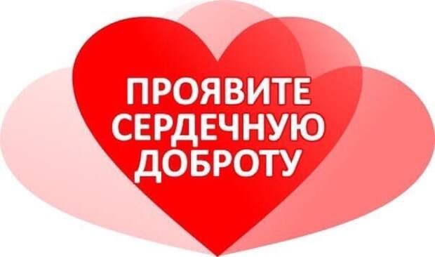 Ищут дом славные ангелочки, спасенные из садоводства! Поселите в своём доме любовь!!!