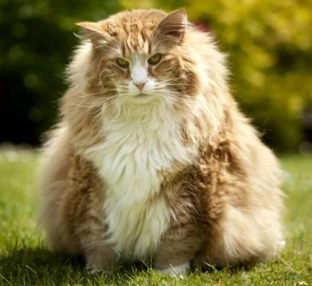 Борьба за кота. В ней не было победителей