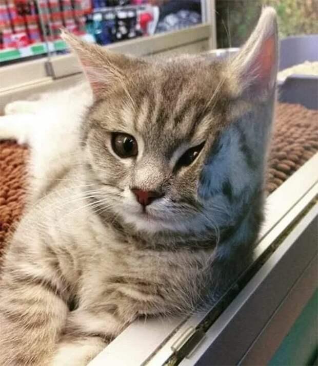 Что я слышу???? котики, коты, милота, мотики, сквозь стекло