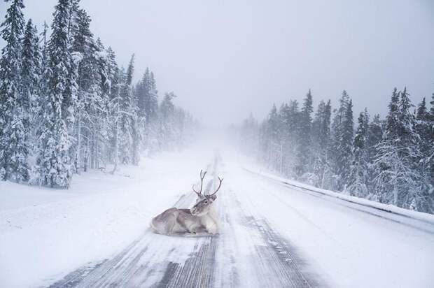 Сказочная Лапландия