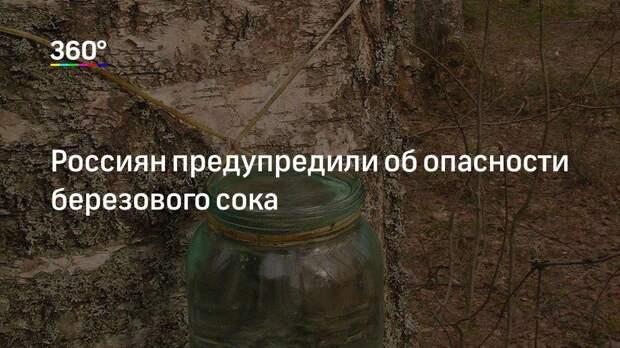 Россиян предупредили об опасности березового сока