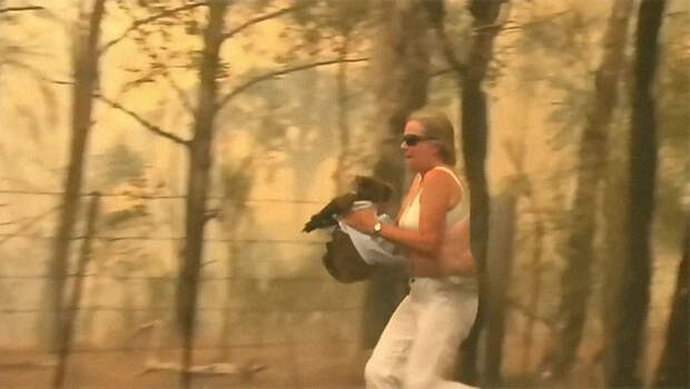 Женщина пожертвовала своей одеждой, чтобы спасти коалу из лесного пожара
