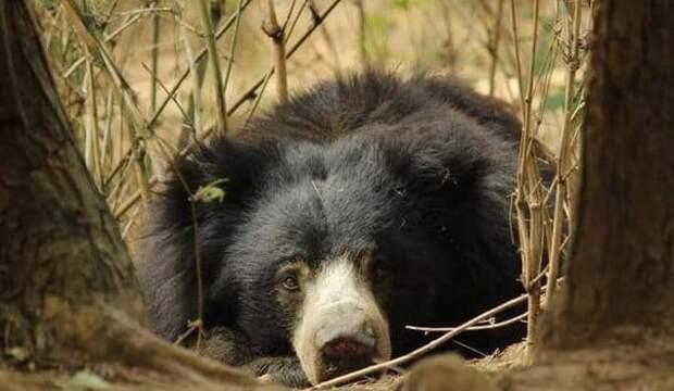 медведь в дикой природе