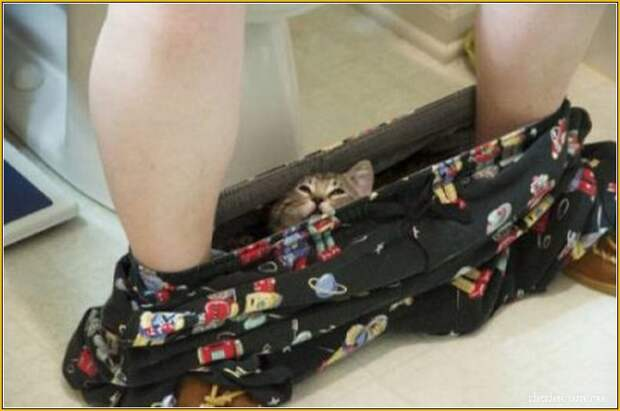 """Коты следят (40 фото) """" Ex.BY - фотоприколы, фото девушек и животных"""