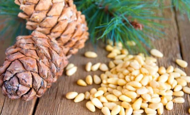 Добыча кедрового ореха: хлеб тайги