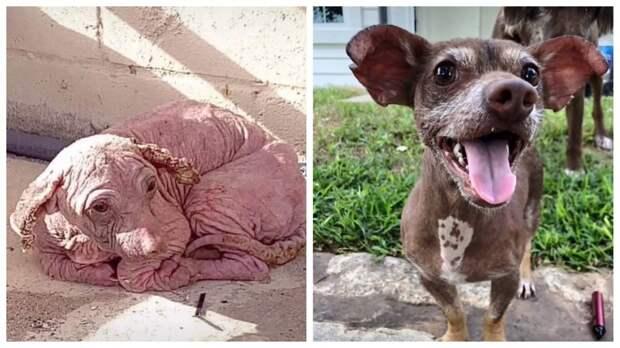 Чудесная история спасения бездомного пса по кличке Добби