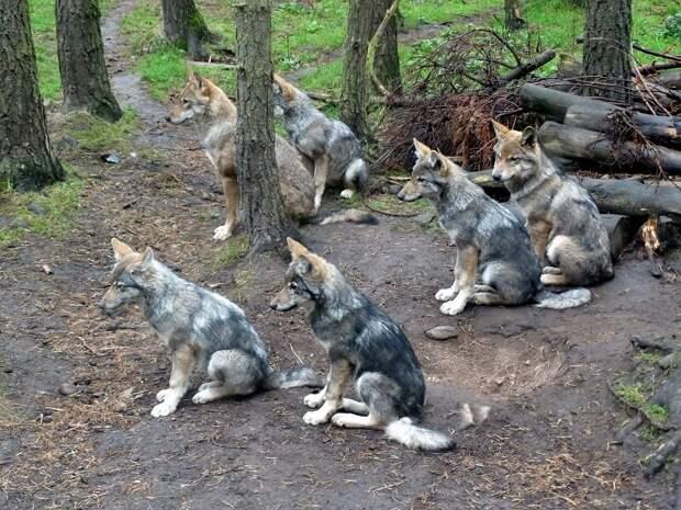 Ну да, издалека можно за собачьих щенков принять.