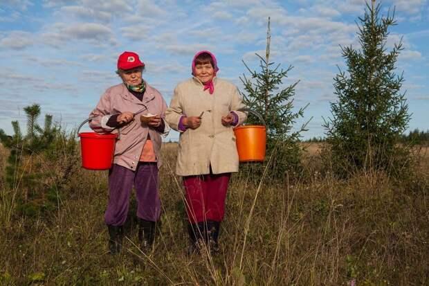 Госдума готовит новый закон о сборе грибов и ягод