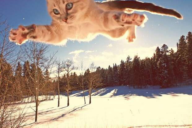 Про котей и людей