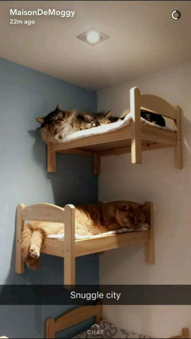Спаленки для кошек