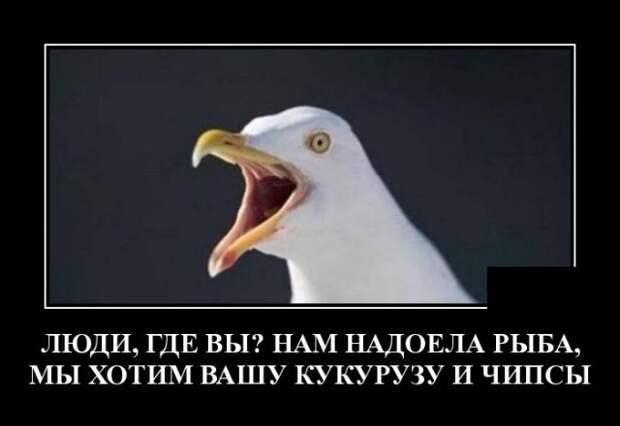 Демотиватор про птиц и людей