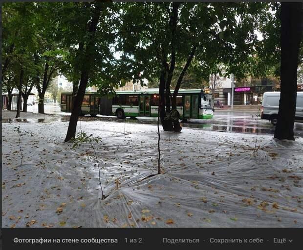 Фото дня: газон в Бабушкинском держит оборону