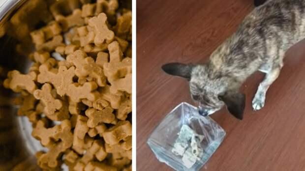 Как сделать из собаки берсерка. Хозяева обматывают миски псов прозрачной плёнкой и уносят ноги