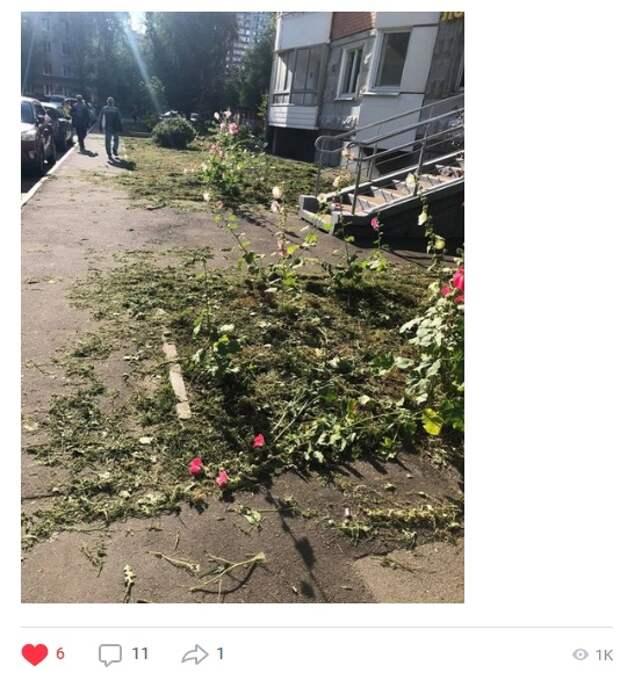 Неизвестные уничтожили клумбу с цветами в Ясном проезде