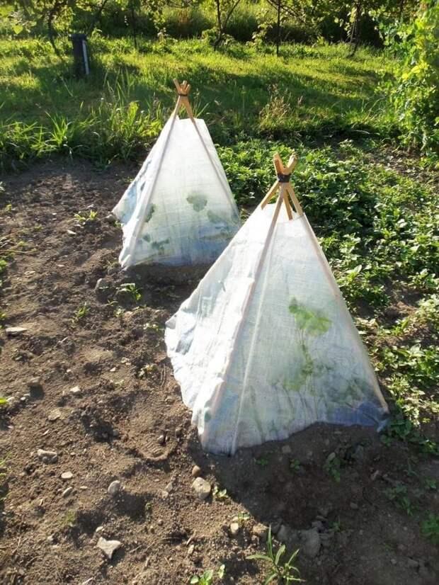 Парник для огурцов: крутые идеи, способные обеспечить ранний урожай