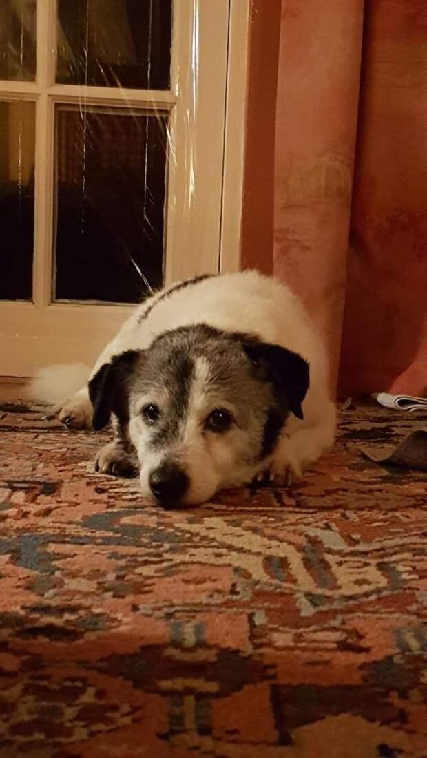 пес лежит у дверей
