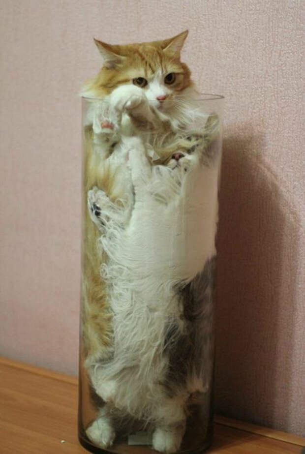 В стеклянной колбе.