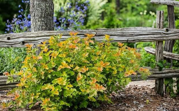 Разноцветные кустарники на участке: чарующее великолепие сада!