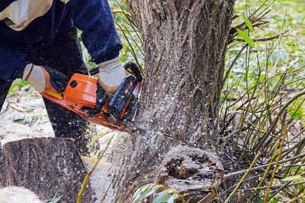 На Кашенкином Лугу убрали спиленное дерево