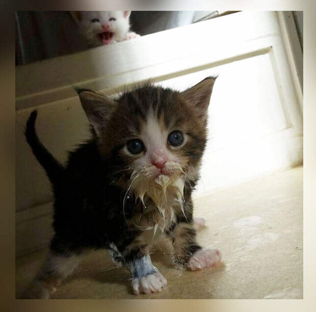 10 фото-доказательств того, что котята не умеют аккуратно есть