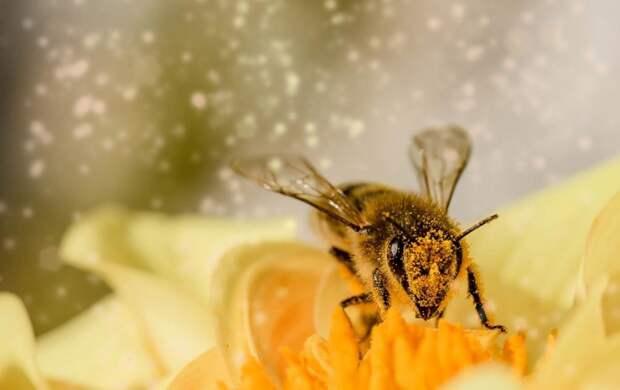Что будет если в мире полностью исчезнут пчелы? Неприятный сценарий