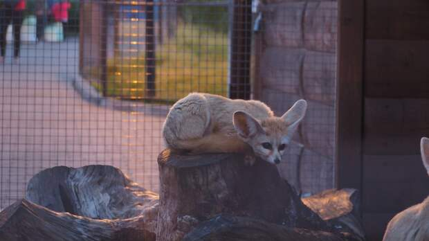Жители Удмуртии могут пожертвовать животным зоопарка овощи и яблоки