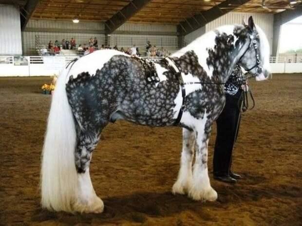 10 лошадей с самым уникальным окрасом в мире