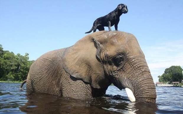 Вот это дружба! Совершенно разные животные, которые поладили друг с другом