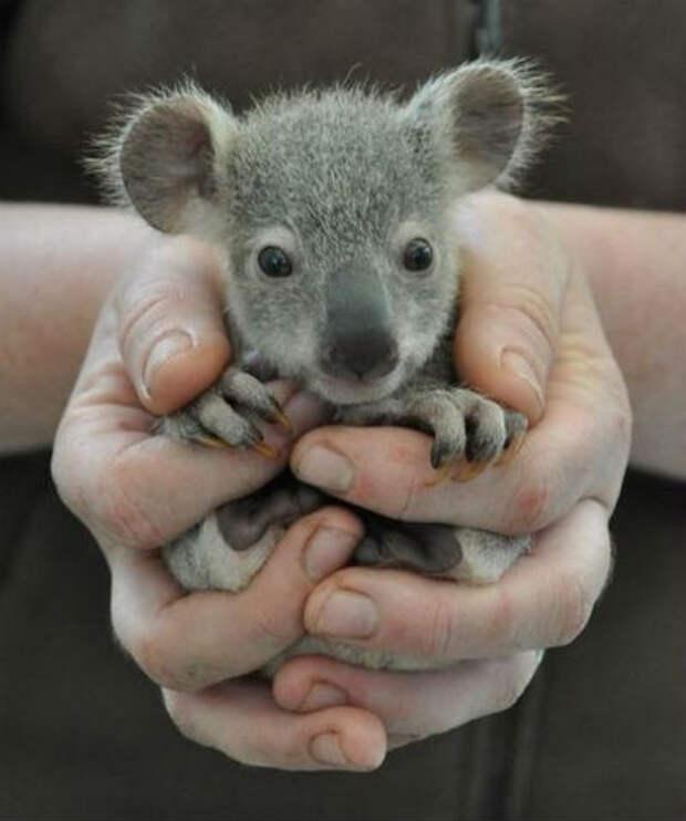 Милые малыши - животные