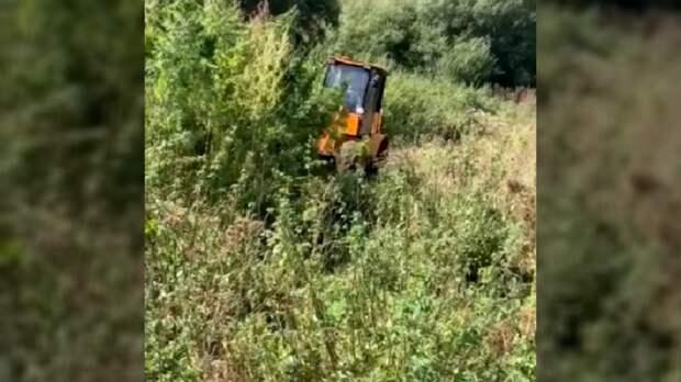 НаСтаврополье полицейские уничтожили поле дикорастущей конопли