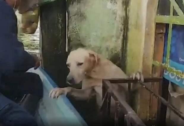 Моряки спасли лабрадора во время наводнения в Мексике. Он чуть не утонул